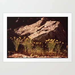 Central Texas - Near Lake Travis Art Print