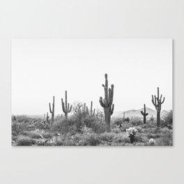 DESERT / Scottsdale, Arizona Canvas Print
