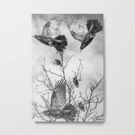Krummar (raven) Metal Print
