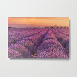 I - Sunrise over blooming fields of lavender in the Provence, France Metal Print
