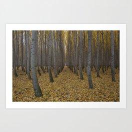 Boardman Tree Farm Art Print