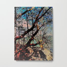 Arbutus Trees, Stoney Hill Sunset Metal Print