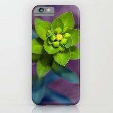 Wild euphorbia 31 iPhone 6 Slim Case