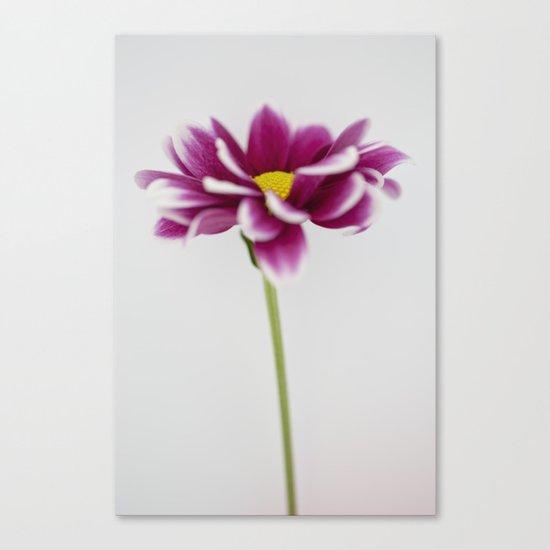 Chrysanth Canvas Print
