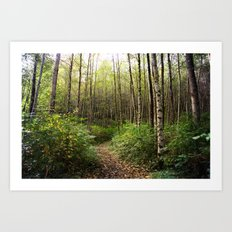trail in the woods Art Print