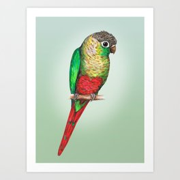 Conure with a heart on its belly Art Print