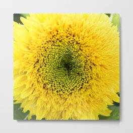 Teddy Bear Sunflower Metal Print