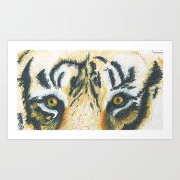 Tiger's Gaze Art Print