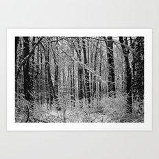 Snow Forest Art Print