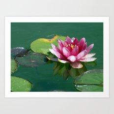 Pink Waterlilly Art Print