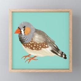 Zebra Finch Framed Mini Art Print