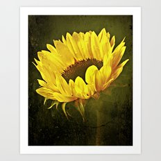 Petals Of A Sunflower Art Print