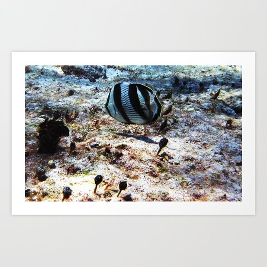 Butterfly fish Art Print