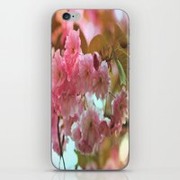 cherry blossoms iPhone & iPod Skins featuring Cherry Blossoms by Judy Palkimas