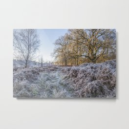 Along the Frosty Path Metal Print