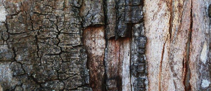 Tree Bark close up Coffee Mug