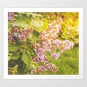 Lilac branch, close-up on a bright sunny day by annamatveeva