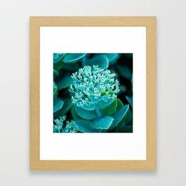Flower Buds - I Framed Art Print