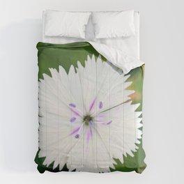 White Dianthus Comforters