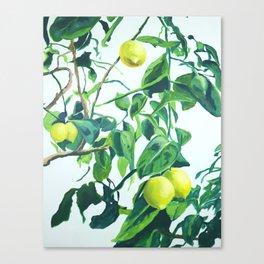 Foliage I / Lemon Tree Canvas Print