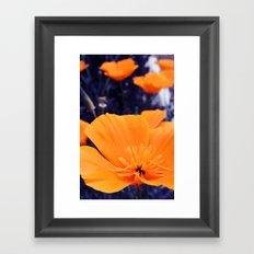 California Poppy Dark  Framed Art Print
