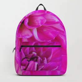 Close-up image of the flower dahlia on pink background. Shallow depth of field. Backpack