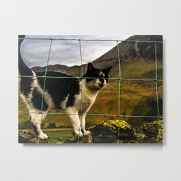 Cat scratch Metal Print