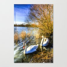 The Peaceful Watching Swans Canvas Print