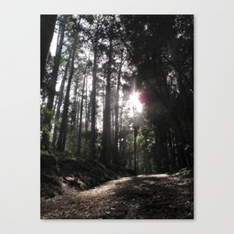 Forest Walks 2 Canvas Print