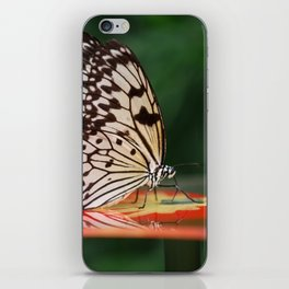 Butterfly On A Shiny Table iPhone Skin