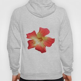 Gorgeous Red And Gold Hawaiian Hibiscus Flower No Text Hoody