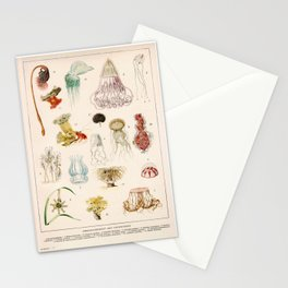 Adolphe Millot - Mollusques 02 - French vintage zoology illustration Stationery Cards