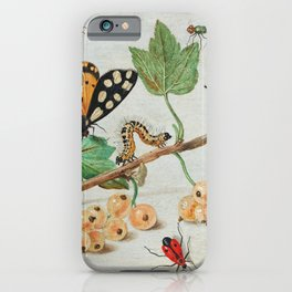Insects and Fruits (1660-1665) by Jan van Kessel iPhone Case