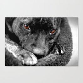 Puppy Eyes. Canvas Print