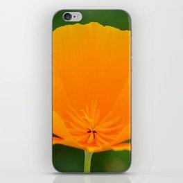 California Poppy close up by Teresa Thompson iPhone Skin