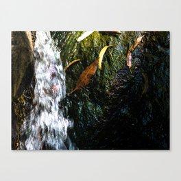 Highfields falls Canvas Print