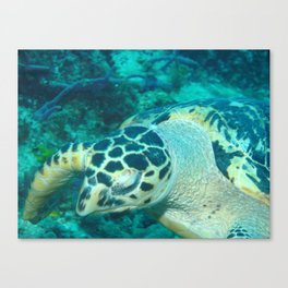 Diving Canvas Print