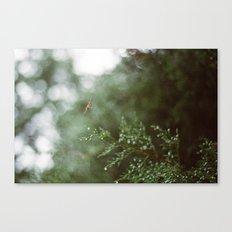 Pine Mist Series: 3 Canvas Print