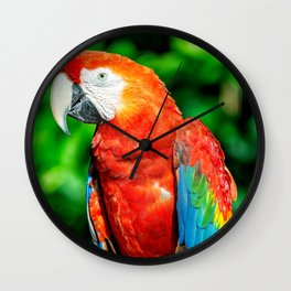 Amazon Parrot Wall Clock