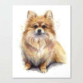 Pomeranian Dog Pom Canvas Print