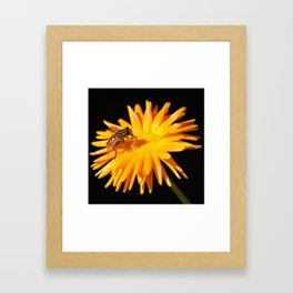 Hoverfly Framed Art Print