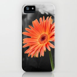 red gerbera daisy in the vase iPhone Case