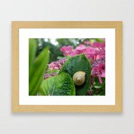 marcel the shell Framed Art Print