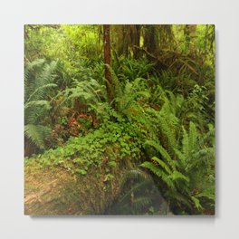 In The Cold Rainforest Metal Print