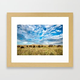 Grazing - Bison Graze Under Big Sky on Oklahoma Prairie Framed Art Print