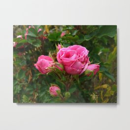 Hot Pink Rose Cluster Metal Print