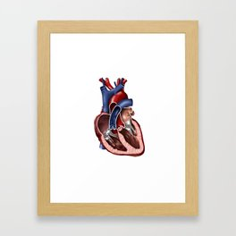 Cross section of human heart. Framed Art Print