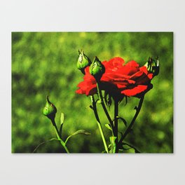 A Kiss from a Rose Canvas Print