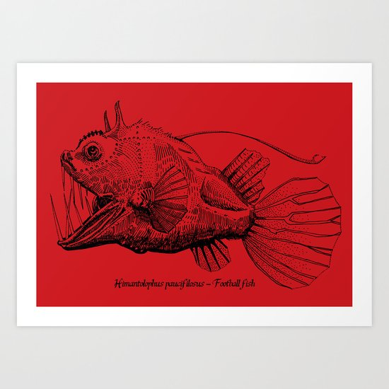 Himantolophus paucifilosus - Football fish Art Print