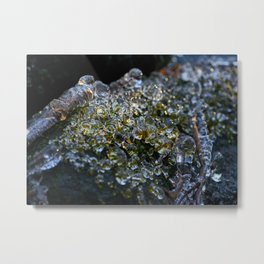 Forest Moss Ice I Metal Print